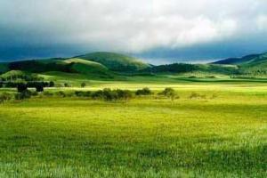 呼伦贝尔典型草原
