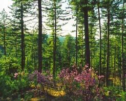 呼伦贝尔汗马自然保护区